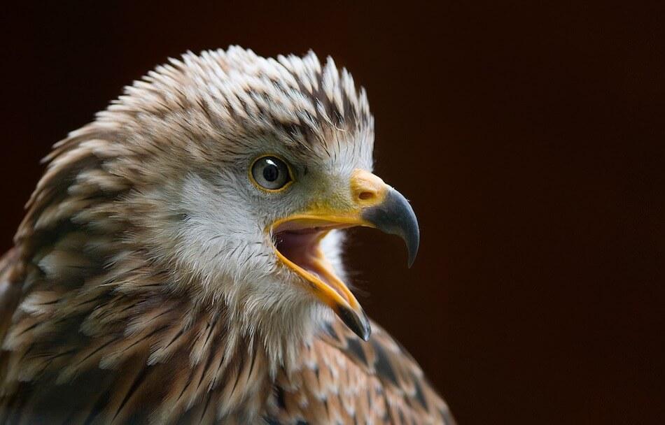 fotografare-uccelli