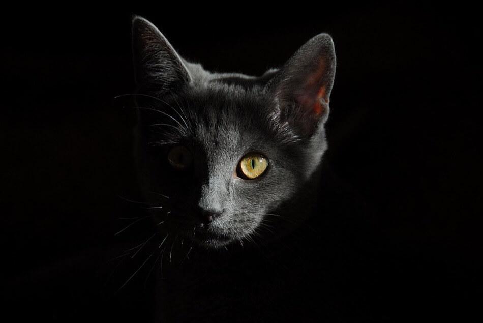ritratto-gatto