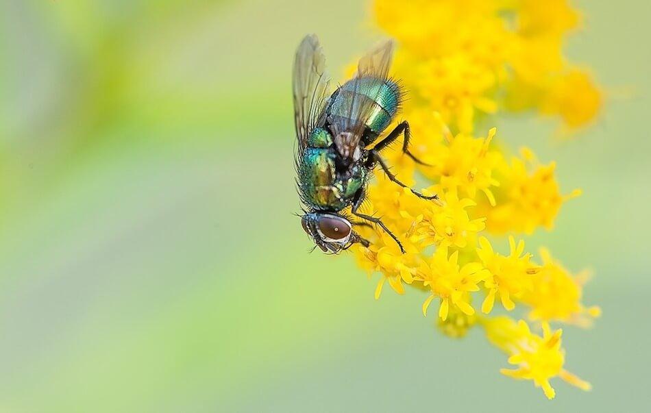 mosca-macro-fotografia