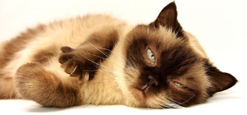 gatto fotografo