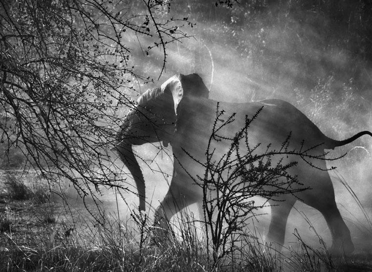 fotografia bianco e nero salgado